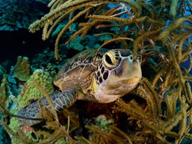 sea turtles worth saving small